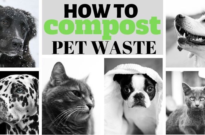 How to compost pet waste facebook