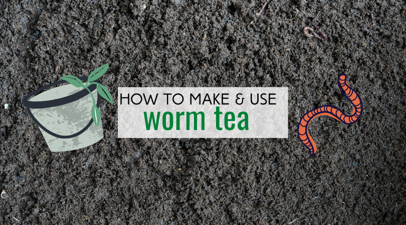 Find out how to make and use worm tea