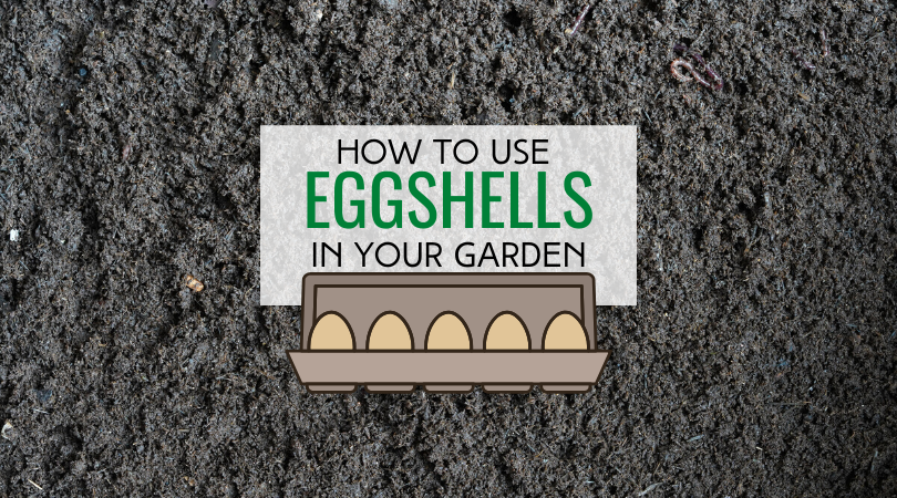 Find out how to use eggshells in your garden