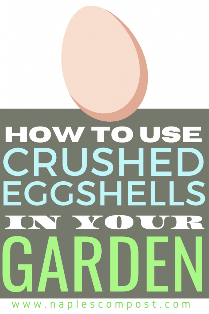 How to use crushed eggshells in your garden
